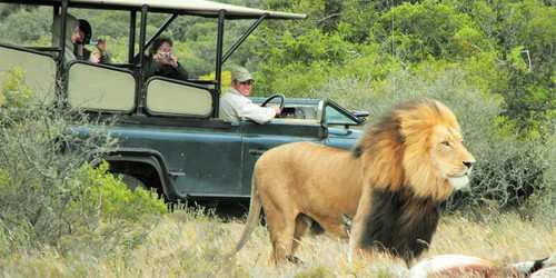 2 Day Safari Image